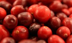 cranberries-small